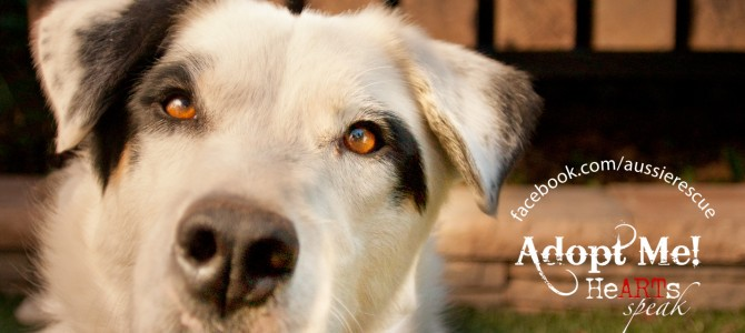 February's Adoptable Dog of the Month: Bandit