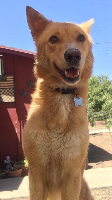 San Diego Dog Rescue Foster